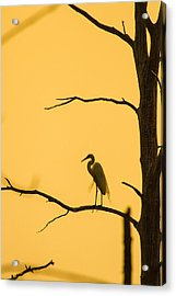 Lonely Silhouette Acrylic Print