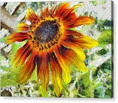 Lonely Sunflower Acrylic Print