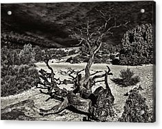 Lonely Tree #4  Acrylic Print by Alex Galkin