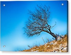 Lonely Tree Blue Sky Acrylic Print