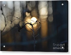 Lonely Tree Branch With Bokeh Love -georgia Acrylic Print
