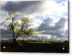 Lonely Tree Is The Summer Acrylic Print