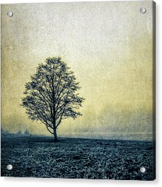 Acrylic Print featuring the photograph Lonely Tree by Marion McCristall