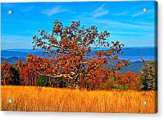 Lonely Tree Skyline Drive Va Acrylic Print