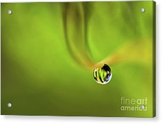 Lonely Water Droplet Acrylic Print
