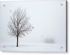 Lonely Winter As The Birds Return Acrylic Print