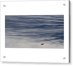 Lonely Winter Leaf Acrylic Print