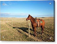 Lonesome Horse Acrylic Print by Todd Klassy