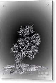 Lonesome Me Acrylic Print by John Krakora