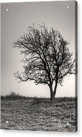 Acrylic Print featuring the photograph Lonesome Tree by Tamyra Ayles