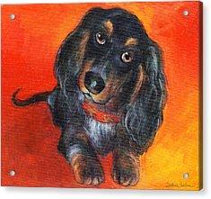 Long Haired Dachshund Dog Puppy Portrait Painting Acrylic Print by Svetlana Novikova