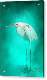 Long Legs Acrylic Print