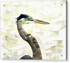 Long Neck 4 Acrylic Print by Marty Koch