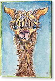 Long Neck Alpaca Acrylic Print