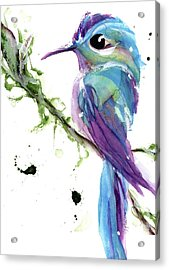 Acrylic Print featuring the painting Long-tailed Sylph by Dawn Derman