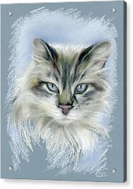 Longhaired Cat With Blue Eyes Acrylic Print