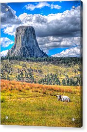 Longhorn At Devils Tower Acrylic Print
