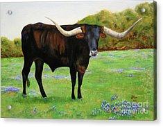 Longhorn In Bluebonnets Acrylic Print