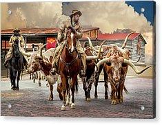 Longhorn Parade Acrylic Print