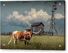 Longhorn Steer In A Prairie Pasture By Windmill And Old Gray Wooden Barn Acrylic Print