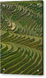 Longji Rice Fields Acrylic Print by Clipworks