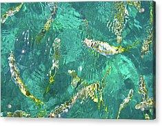 Looe Key Reef Acrylic Print by Charles Harden