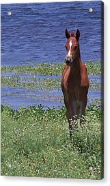 Look At Me Acrylic Print by Lilly King