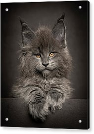 Look At Me Acrylic Print
