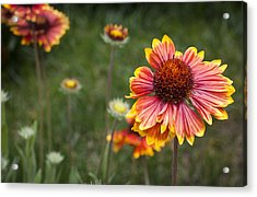 Look At What The Rain Gave Acrylic Print by Karen LeGeyt
