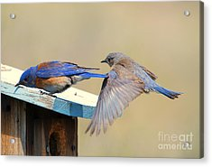 Look Behind You Acrylic Print by Mike Dawson