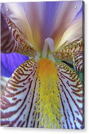 Look Inside Acrylic Print by Michele Caporaso
