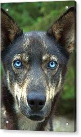 Look Into My Eyes... Acrylic Print