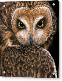 Look Into My Eyes Acrylic Print by Pat Erickson