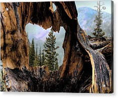 Look Into The Heart Acrylic Print by Jim Hill