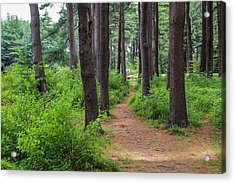 Look Park Nature Path Acrylic Print