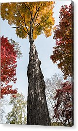 Look Up Acrylic Print