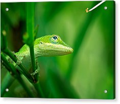 Look Up Lizard Acrylic Print