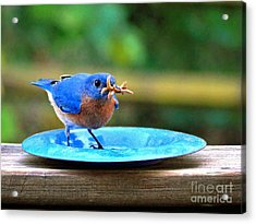 Look What I Found Acrylic Print