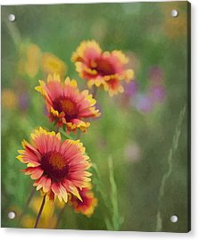 Acrylic Print featuring the photograph Look...a Flower by John Crothers