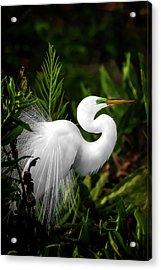 Lookin' For Love Acrylic Print
