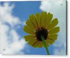 Looking At The Sky Acrylic Print by Ilias Kordelakos