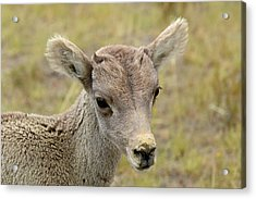 Acrylic Print featuring the photograph Looking At You Kid by Bruce Gourley