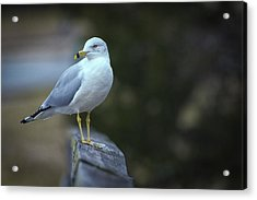 Acrylic Print featuring the photograph Looking Back  by Cindy Lark Hartman