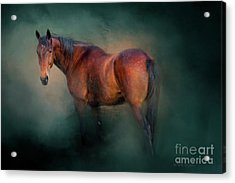 Looking Back Acrylic Print by Michelle Wrighton