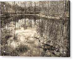 Acrylic Print featuring the photograph Looking Down by Betsy Zimmerli