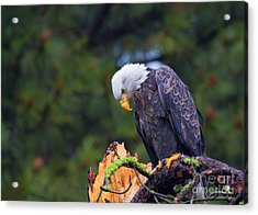 Looking Down On The World Acrylic Print by Mike  Dawson