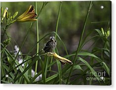 Looking For A Friend 2 Acrylic Print by E Mac MacKay