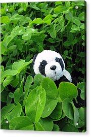 Acrylic Print featuring the photograph Looking For A Lucky Clover by Ausra Huntington nee Paulauskaite