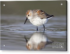 Looking For Breakfast Acrylic Print by Tim Grams