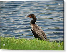 Looking For Food Acrylic Print by Clay Peters Photography